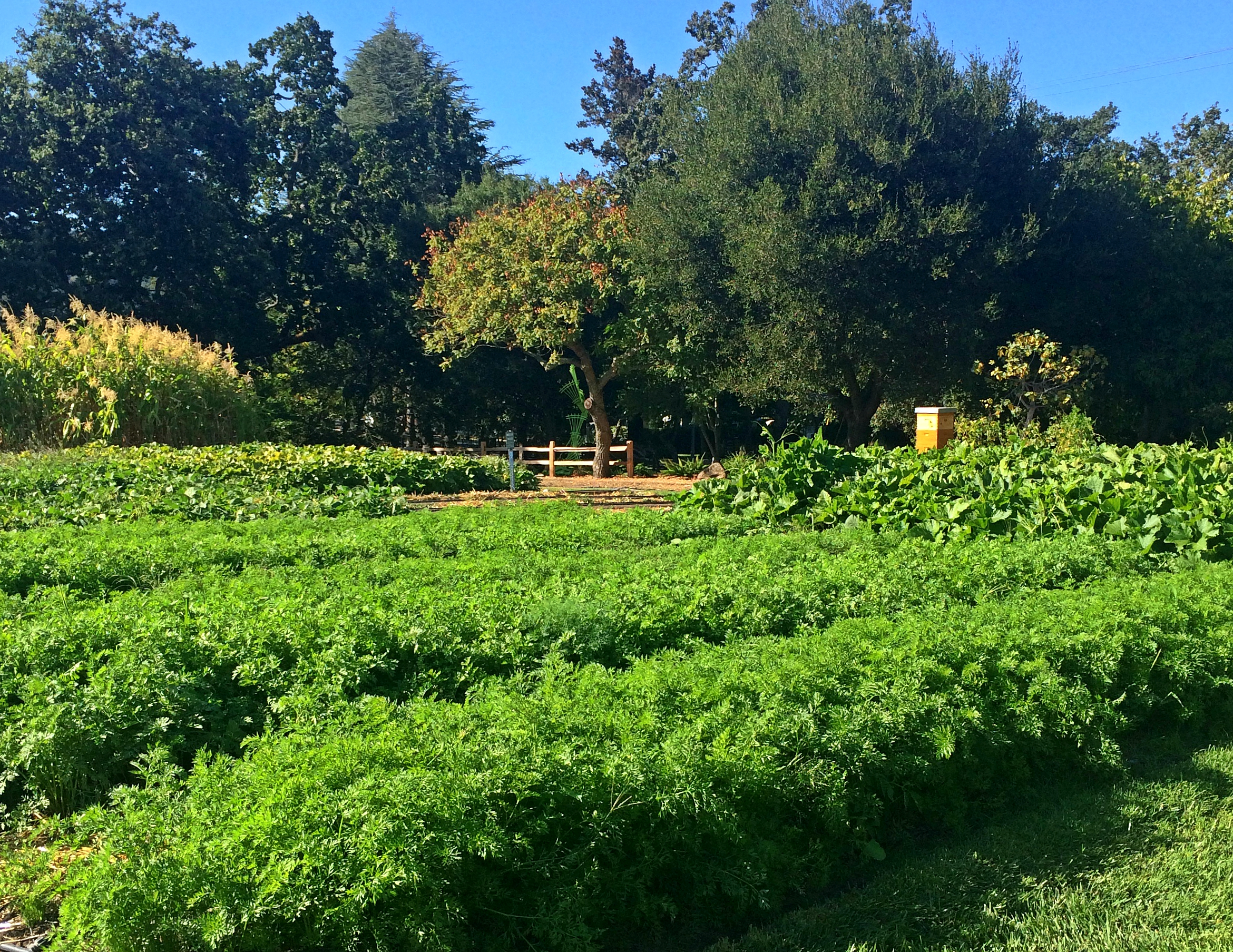 French Laundry Culinary Garden
